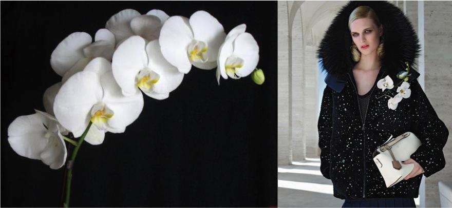 fendi orchid alidifirenze