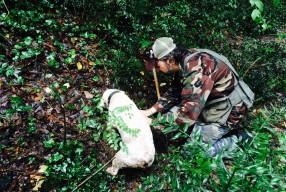 INTERVIEW Cristiano Savini, spécialiste de la truffe blanche de Toscane