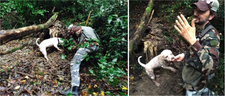 Savini chasse à la truffe blanche alidifirenze