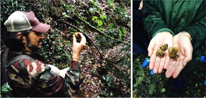 Savini chasse à la truffe blanche alidifirenze2