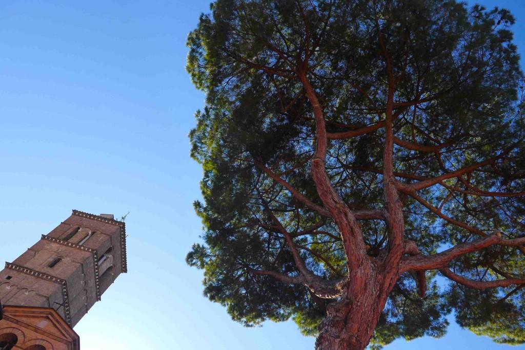 Rome Alidifirenze