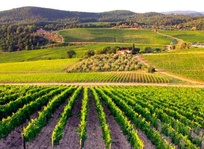 Domaine Frescobaldi vigne