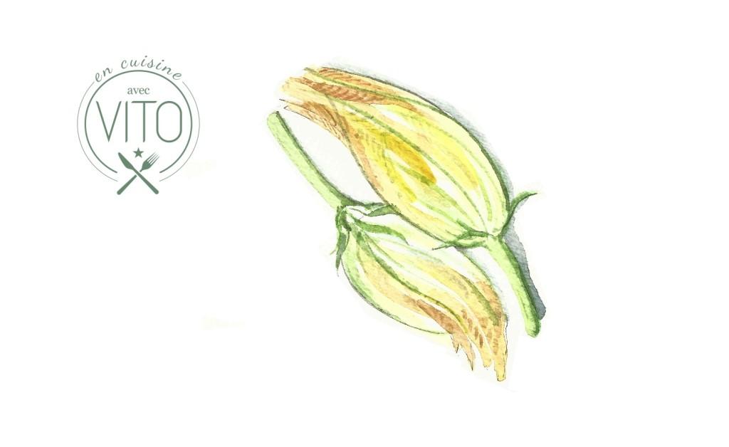 cover fleur de courgette vito mollica ali di firenze
