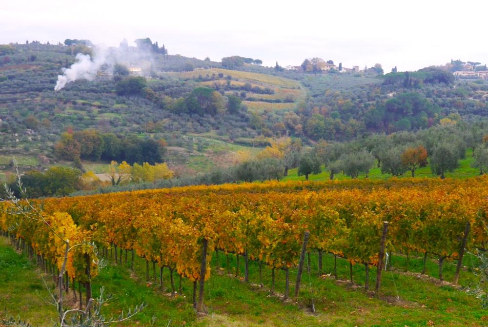 Huile d'olive nouvelle toscane 7 ali di firenze