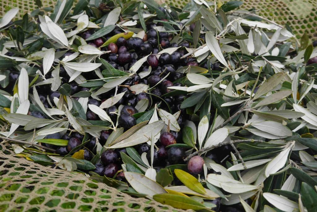 Huile d'olive nouvelle toscane ali di firenze