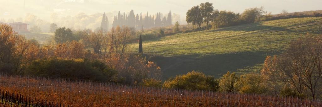 NOV 18, 2004: Cerbaia, Montesecondo Wine Farm © Guglielmo de' Micheli