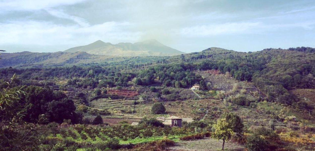 3 domaines viticoles sur l'Etna