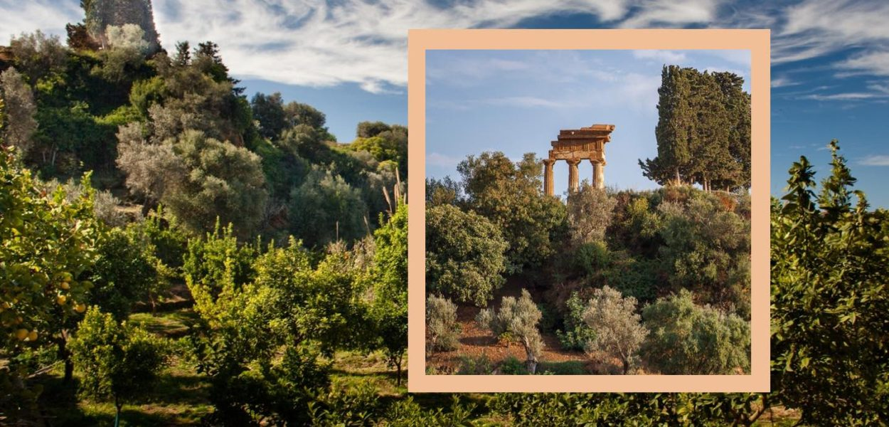 Jardin de la kolymbetra dans la vall e des temples for Au jardin d alice flers