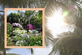 Merveilleux jardins siciliens / L'exotique jardin contemporain de San Giuliano