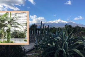 Merveilleux jardins siciliens / Aux pieds de l'Etna, Racidepura