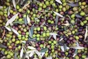 Comment bien choisir son huile d'olive dans le commerce