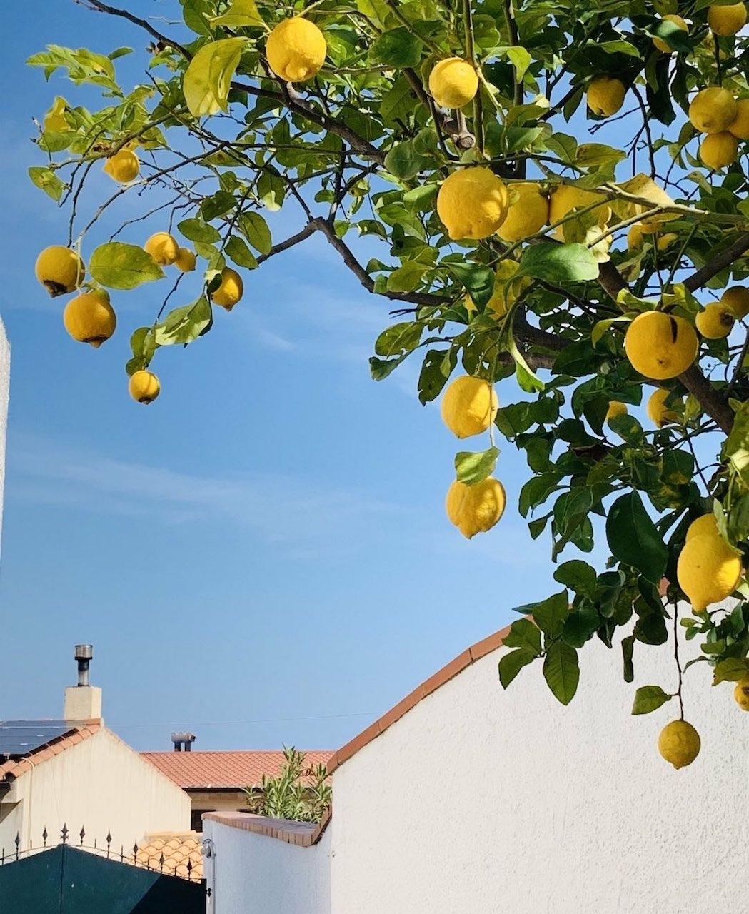 sardaigne citrons