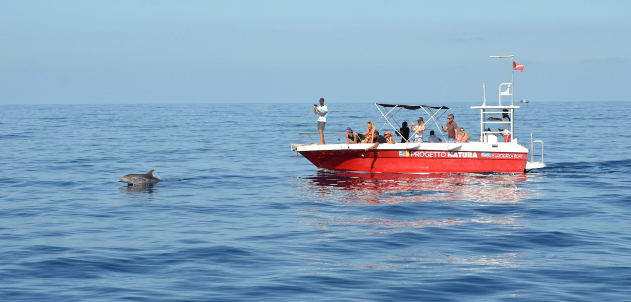 sardaigne dauphin