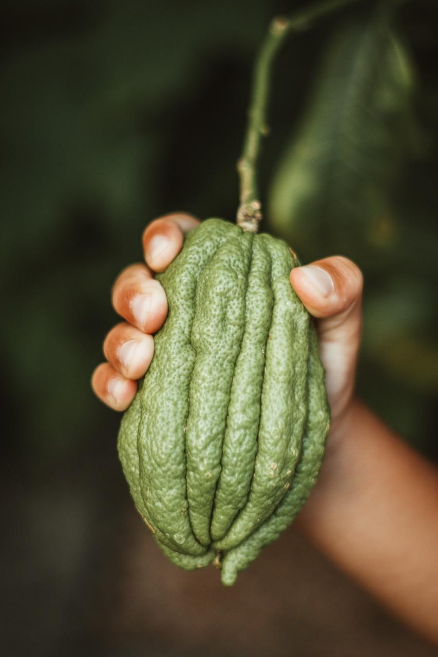 fruit jardin ottmanngut