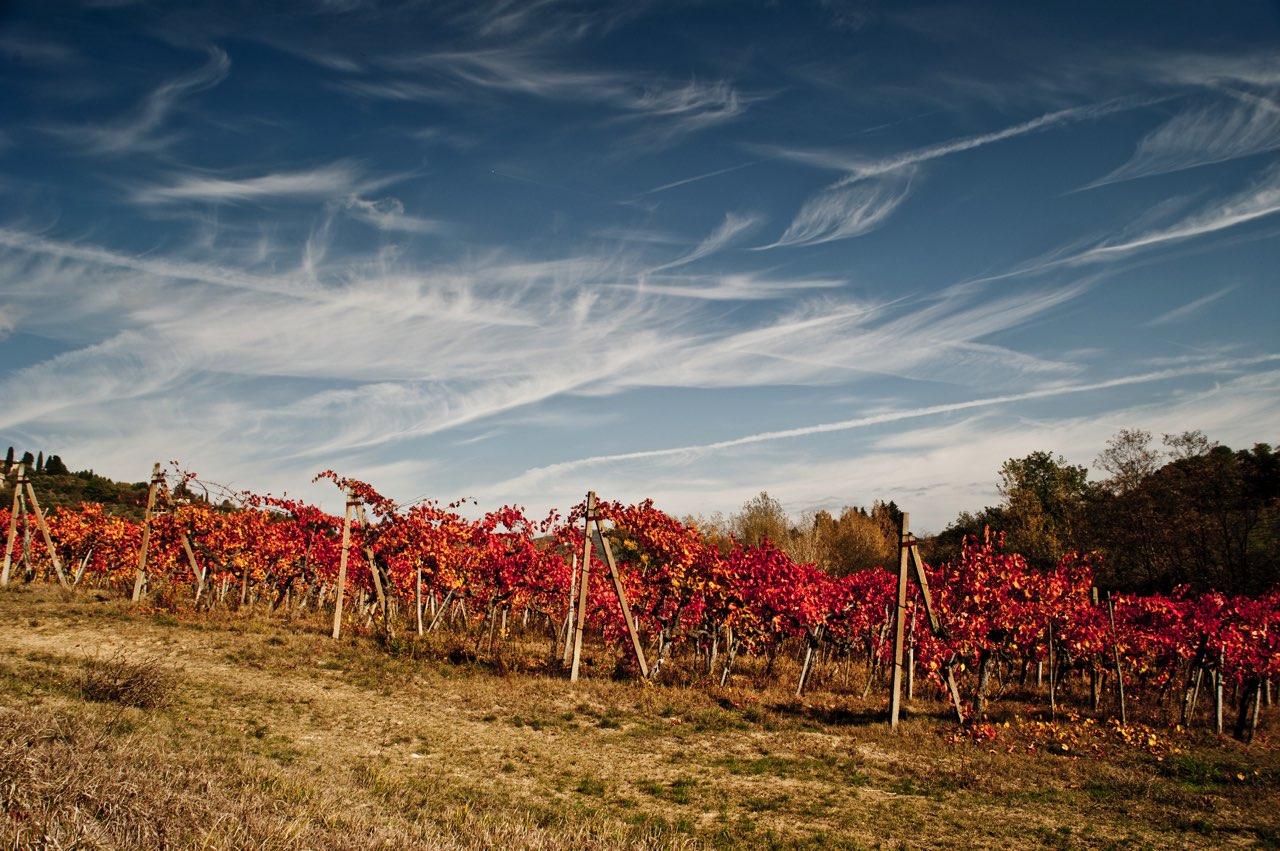 chianti rufina paysage vignes tenuta bossi