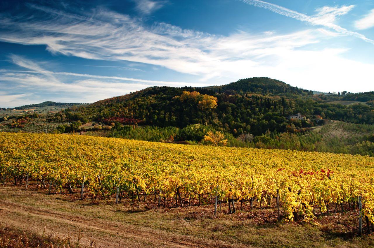 chianti rufina paysage vignes