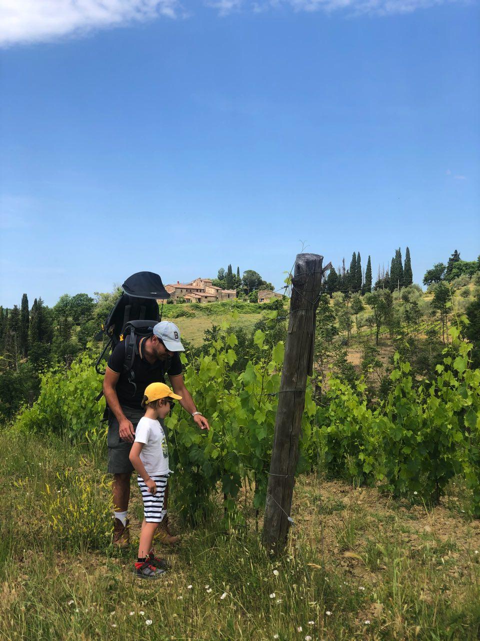 Trekking Chianti vignes